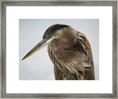 In Deep Thought - # 13 Framed Print by Paulette Thomas