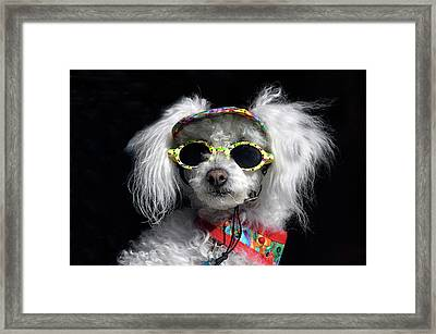 In Dognito Framed Print by Geraldine Alexander