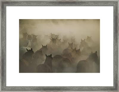 In Dust Framed Print