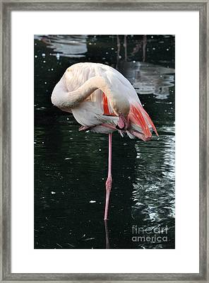 In Equilibrium Framed Print by Simona Ghidini