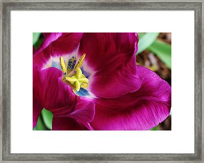 In Every Package There Is A Suprize Framed Print by Bruce Bley