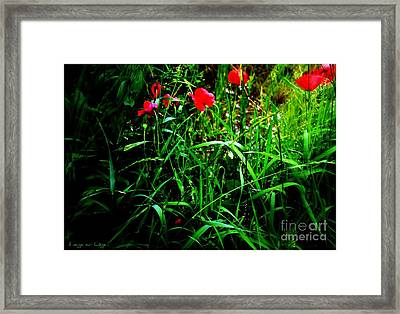 In Flanders Fields Framed Print by Mariana Costa Weldon