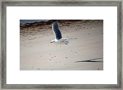 In Flight Framed Print by Alan Holbrook