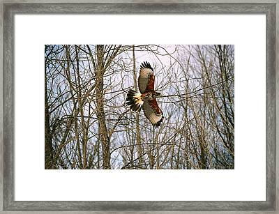 Framed Print featuring the photograph In Flight by David Porteus