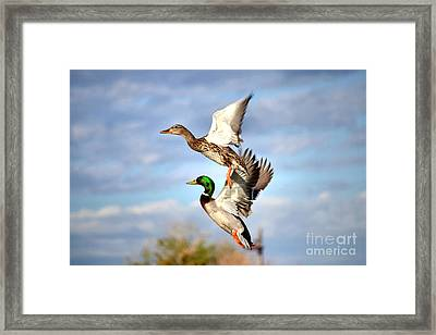 In-flight Framed Print by Deb Halloran
