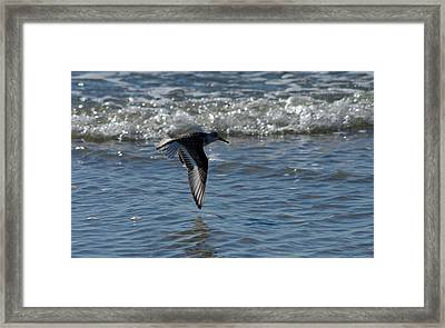 Framed Print featuring the photograph In Flight by Greg Graham