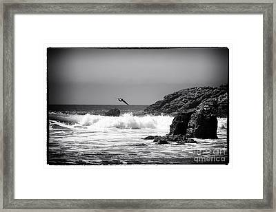 In Flight Framed Print by John Rizzuto