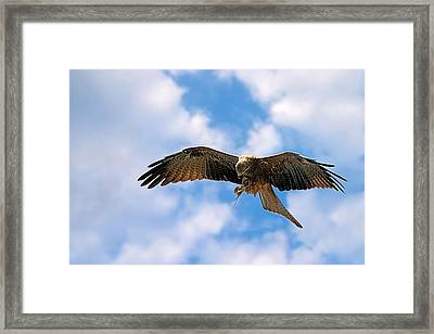 In Flight Meal Framed Print
