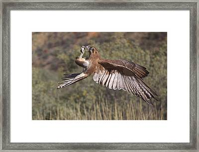 In Flight Meals Framed Print by Venetia Featherstone-Witty