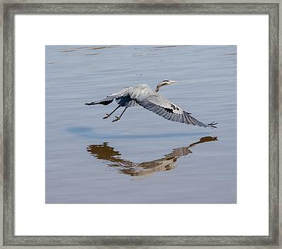 In Flight Music Framed Print