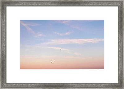 Framed Print featuring the photograph In Flight Over Rehoboth Bay by Pamela Hyde Wilson