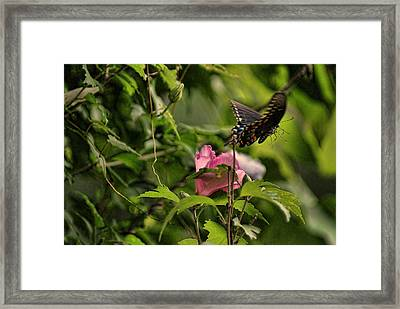 In Flight Framed Print