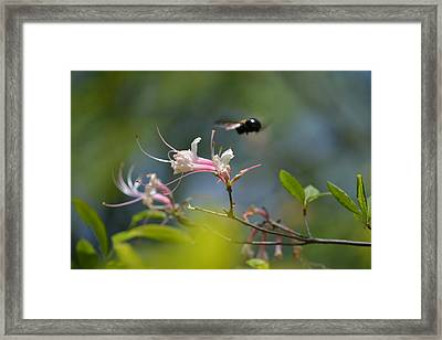 Framed Print featuring the photograph In Flight by Tara Potts