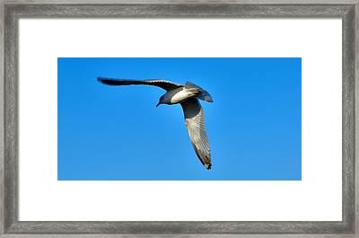 In Flight Framed Print by Thomas  MacPherson Jr