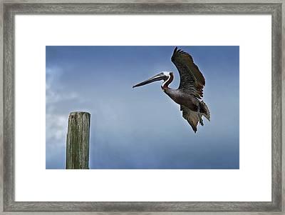 In For A Landing Framed Print