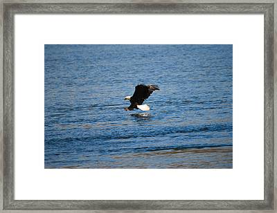 Framed Print featuring the photograph In For The Catch by Gary Wightman