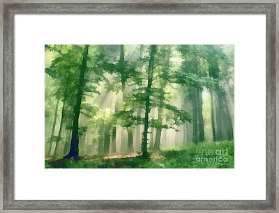 In Forest Framed Print