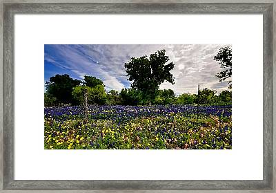 In Full Bloom Framed Print by Cole Black