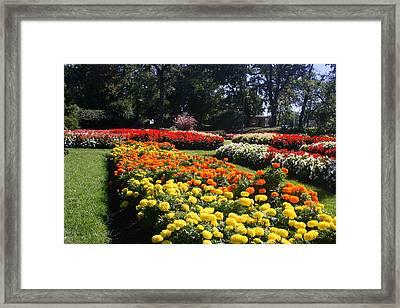 In Full Bloom Framed Print by Kay Novy