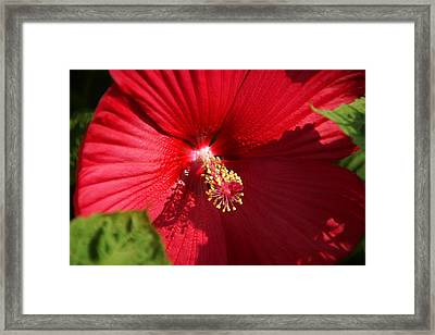 In Full Bloom Framed Print by Thomas Fouch