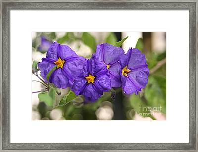 In Harmony Framed Print by Mary Lou Chmura