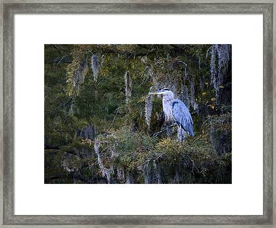 In His Element  Framed Print by JC Findley