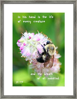 In His Hand Framed Print by Paula Tohline Calhoun