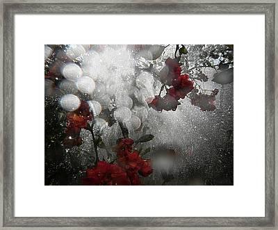 Morning Light In Rain Framed Print