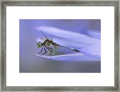 In Lily's Arms Framed Print
