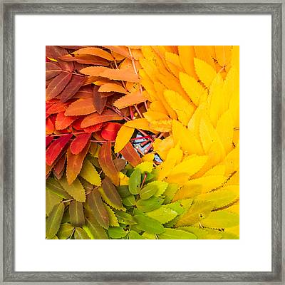 In Living Color Framed Print by Aaron Aldrich
