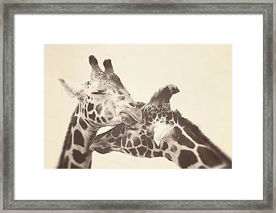 In Love Framed Print by Carrie Ann Grippo-Pike