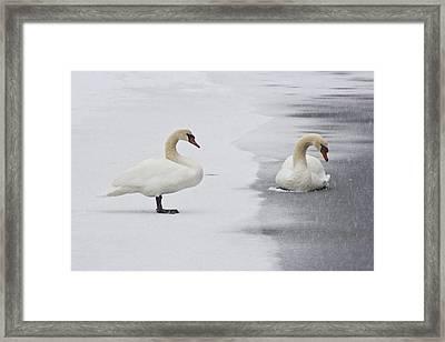 In Love Framed Print by Dennis Coates