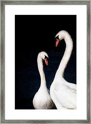 Framed Print featuring the photograph In Love by Laura Melis