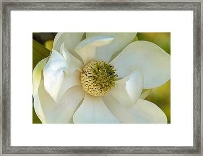 In Loving Memory Framed Print by Cindy McDaniel