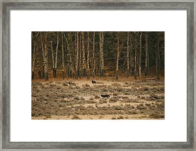 Framed Print featuring the photograph In Memory Of The Druids by Gary Hall