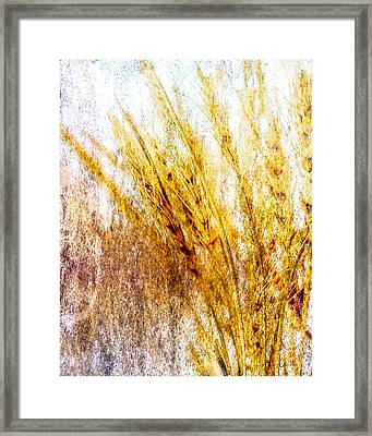 In Memory Of Wheat Framed Print by Bob Orsillo
