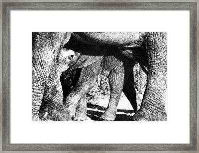 In Mother's Shadow Framed Print