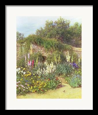 Foxglove Flowers Drawings Framed Prints