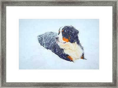 In My Element Framed Print