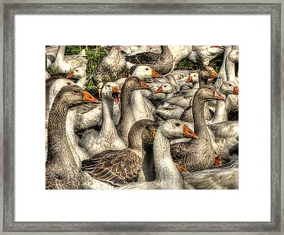 In My Humble Opinion Framed Print