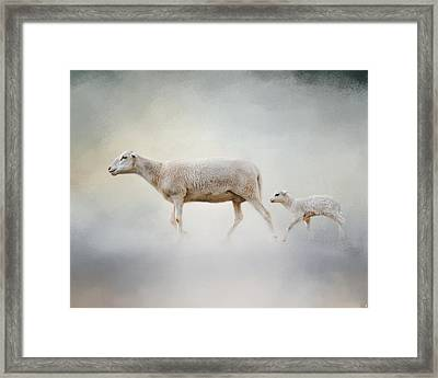 In My Mother's Footsteps - Sheep And Lamb Framed Print by Jai Johnson