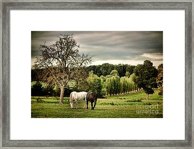 In Perche Framed Print by Olivier Le Queinec