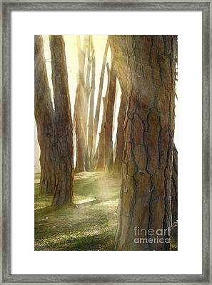 In Pine Forest Framed Print by Mythja  Photography