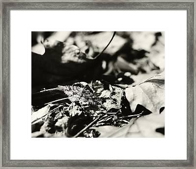 In Plain Sight Framed Print by Rebecca Sherman