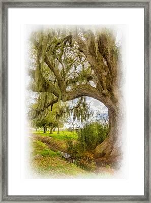 In Praise Of Live Oaks...paint Framed Print by Steve Harrington