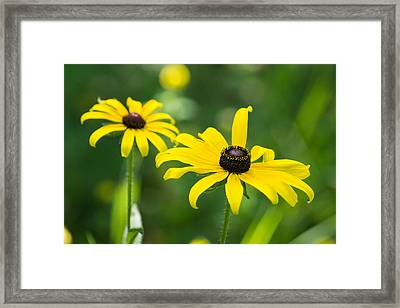 In Praise Of Yellow Framed Print by Bill Pevlor
