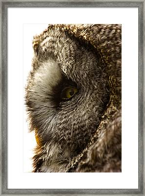 In Profile Framed Print by Gerard Pearson