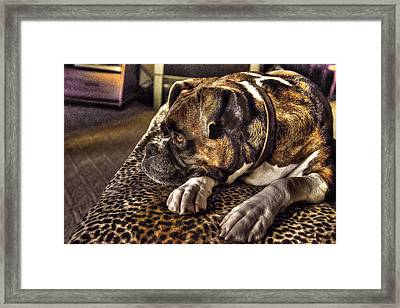 In Repose Framed Print by William Fields