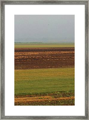 In Rows Framed Print by Sarah Boyd