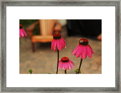 In Search Of A Cold Remedy Framed Print